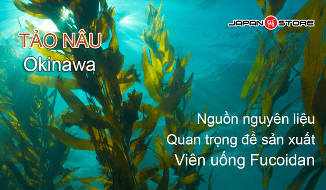 Fucoidan Okinawa Fucoidan Nhat Ban -Tao Nau-2